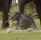 The baby rhino and newborn elephant meet the public for the first time at Whipsnade Zoo