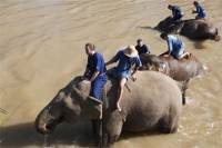 TAKE A DIP: driving elephants in the Mekong river. Mirror, signal, manoeuvre? Amid Thailand
